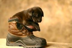 Puppy in een Laars Stock Fotografie