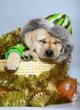 Puppy in een mand met de ornamenten van Kerstmis. Stock Afbeelding