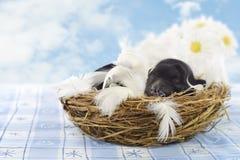 Puppy in een nest Royalty-vrije Stock Foto