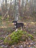 Puppy in een rots Royalty-vrije Stock Foto's