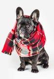 Puppy in een warme sjaal wordt verpakt die Royalty-vrije Stock Afbeelding