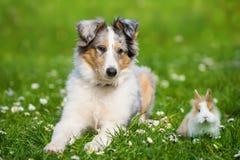 Puppy in een weide royalty-vrije stock foto's