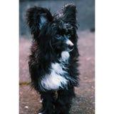 Puppy in een wind stock afbeelding