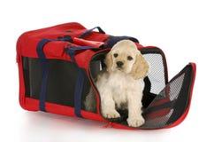 Puppy in een zak van het hondkrat Royalty-vrije Stock Foto's