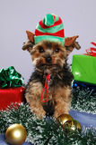 Puppy elf Royalty Free Stock Images