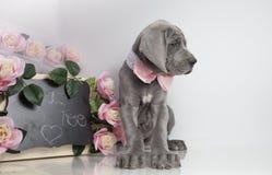 Puppy en bord Royalty-vrije Stock Foto
