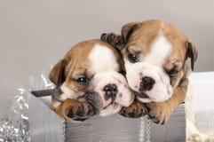 puppy en giftenKerstmis Royalty-vrije Stock Fotografie