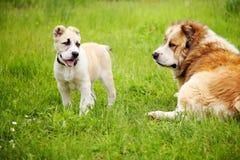Puppy en hond Stock Foto