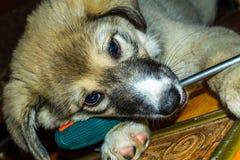 Puppy en hulpmiddelen royalty-vrije stock afbeelding