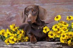 Puppy en kamillebloem stock fotografie