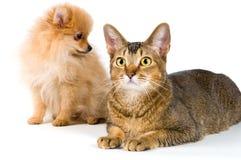 Puppy en kat royalty-vrije stock afbeelding