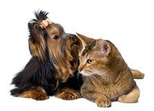 Puppy en kat in studio stock afbeeldingen
