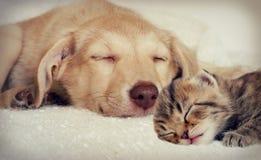 Puppy en katje Stock Afbeeldingen