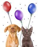 Puppy en katje die omhoog partijgunsten bekijken Royalty-vrije Stock Foto's