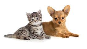 Puppy en katje of kat en hond samen Stock Foto's