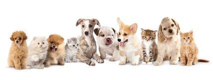 Puppy en katjes Stock Foto's