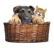 Puppy en katjes het kijken Stock Afbeeldingen