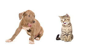 Puppy en katjesgeeuw samen Royalty-vrije Stock Afbeeldingen