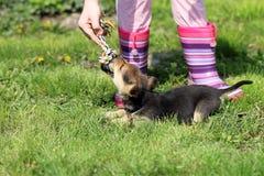 Puppy en kindspel royalty-vrije stock afbeelding
