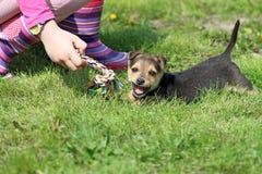Puppy en kindspel met kleurrijke kabel stock afbeeldingen