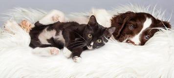 Puppy en Kitten Laying op Bontdeken Stock Fotografie