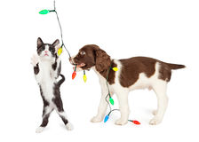 Puppy en Kitten Playing With Christmas Lights Royalty-vrije Stock Afbeelding