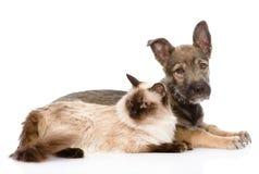 Puppy en siamese kat samen Op witte achtergrond Stock Foto