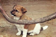 Puppy en wijnstok Royalty-vrije Stock Fotografie