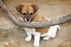 Puppy en wijnstok Stock Fotografie