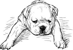Puppy of english bulldog tired Royalty Free Stock Photo