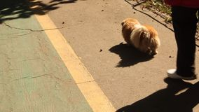 Puppy fat - canine obesity