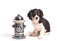 Puppy by Fire Hydrant Stock Images