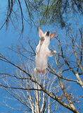 Puppy Flight. Puppy takes to flight in the yard, motion blur Stock Image