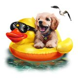 Puppy floats on an inflatable duck watercolor drawing Stock Images
