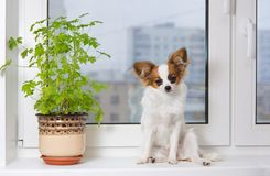 Puppy and flower on window Royalty Free Stock Photos