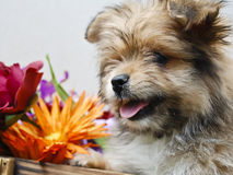 Puppy with Flowers Stock Images
