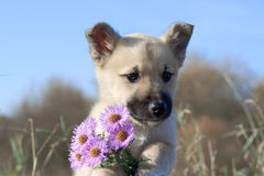 Puppy with flowers Royalty Free Stock Image