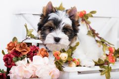 Puppy and flowers stock photo