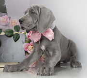Puppy and flowers Royalty Free Stock Photography