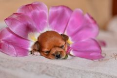 Puppy flowers stock photo
