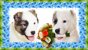 Puppy and flowers; March 8th Stock Photos