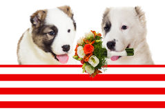 Puppy and flowers; March 8th Stock Image