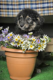 Puppy and  flowers Stock Image