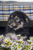 Puppy and  flowers Stock Images