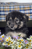Puppy and  flowers Stock Photos