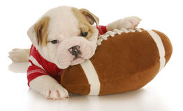 Puppy with football Royalty Free Stock Images