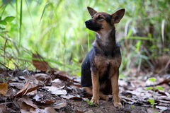 A Puppy in forest wilde. On natural Stock Image