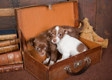 Puppy friends royalty free stock photography