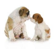 Puppy friends Royalty Free Stock Image
