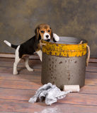 Puppy and garbage bin Royalty Free Stock Photography